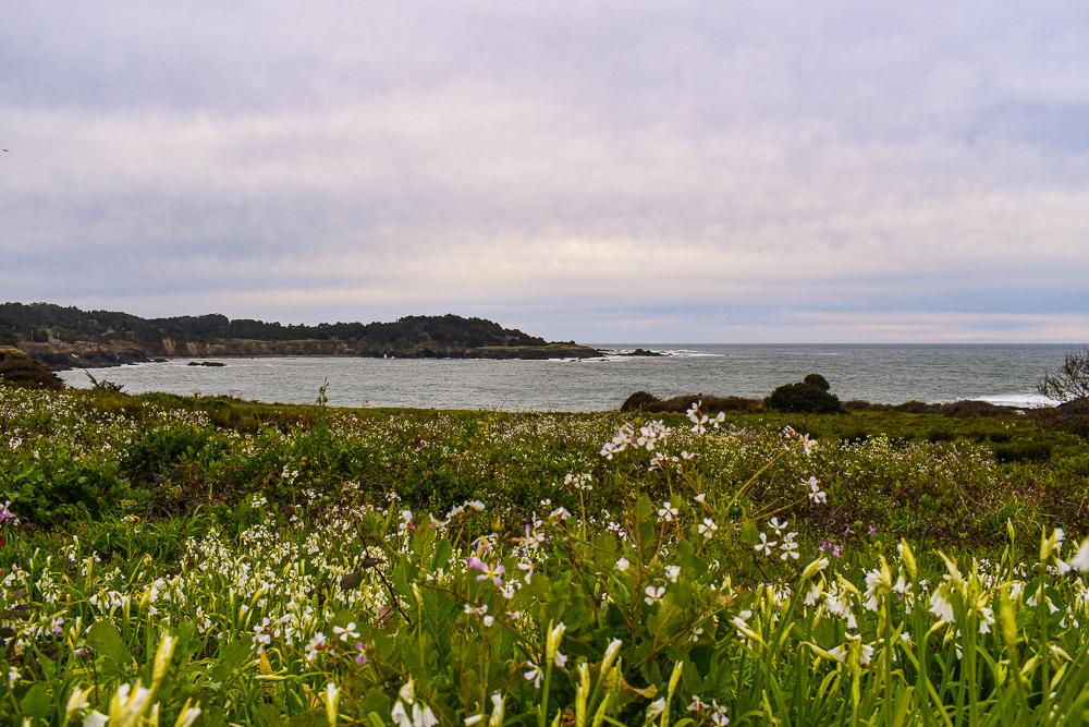 The coast of Mendocino California